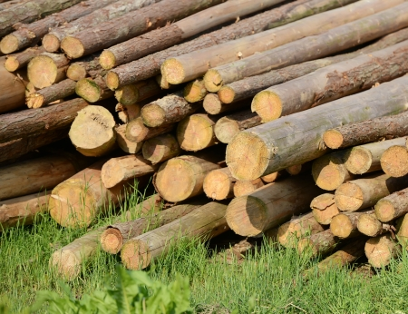 forestry industry: Pile of wood Stock Photo
