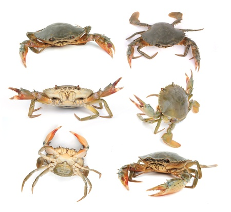 Fresh Raw Crab photo