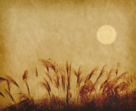 bullrush: reed stalks in the swamp against sunlight