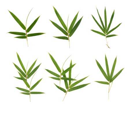 bamboo leaf: bamboo leaves Stock Photo