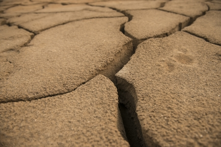 cracked earth: global warming concept of cracked ground