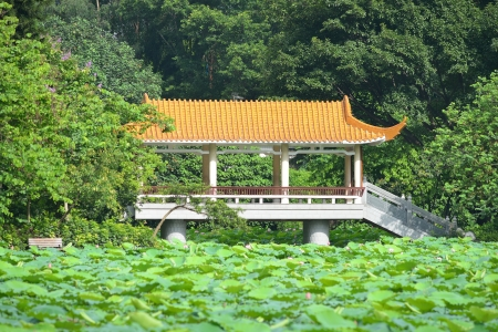 calyxes: Chinese pavilion with lotus pond Stock Photo