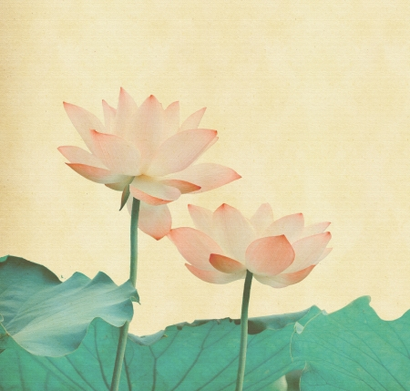 Water Lily on grunge textured background Stock Photo