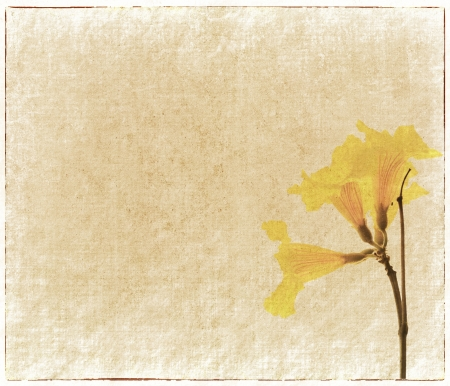 grimy: yellow flower painted on old paper grunge background