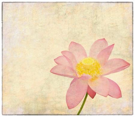 flor de loto: antiguo papel de textura agrietada Foto de archivo