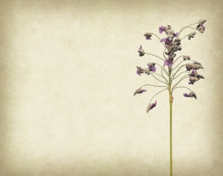 grimy: Bunch of purple flower on grunge textured background