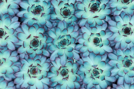 ornamental bush: Macro of succulent plant in the desert Stock Photo