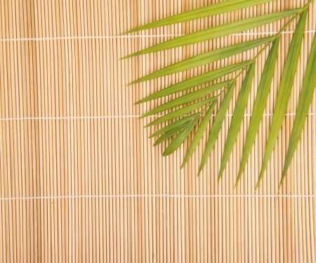 bamboo background with palm leaf photo