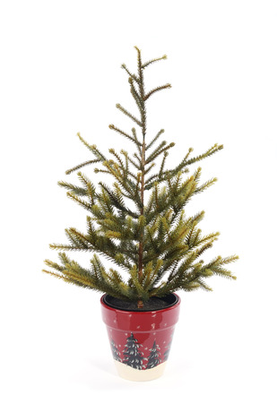 christmas tree in a red pot photo