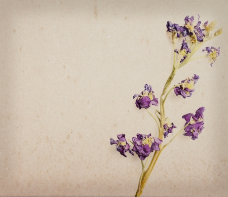 primrose: Hyacinth flowers on a vintage textured