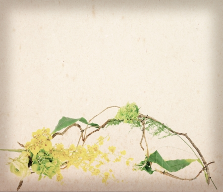 creeper: yellow flower with creeper (vine grape) leaves on worn paper Stock Photo