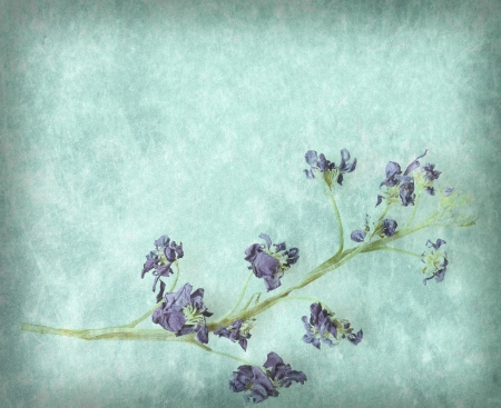 earthy: Hyacinth flowers on a vintage textured background