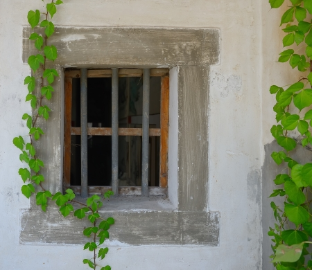 window shutter with ivy on old house wall photo