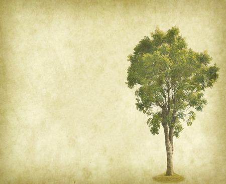 garden frame: Tree with old grunge antique paper Stock Photo