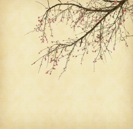 Spring plum blossom blossom on Old antique vintage paper background photo