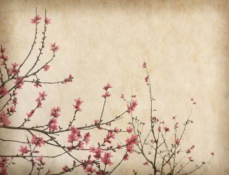 Printemps fleur de prunier fleur sur le Vieux fond de papier antique millésime Banque d'images