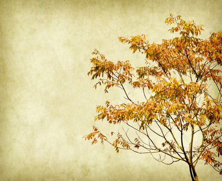 plant tree photo
