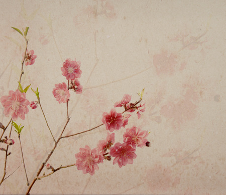 old notebook: plum blossom on old antique vintage paper background