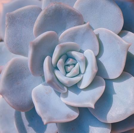 wallflower: Miniature succulent plants Stock Photo