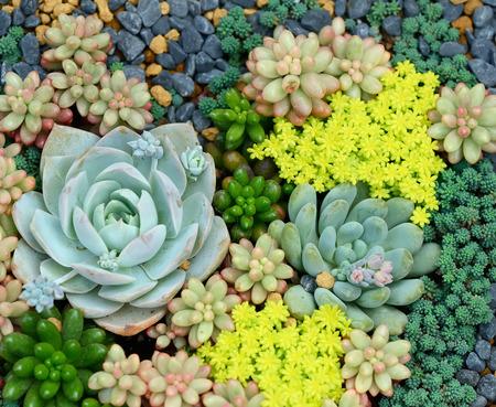 Miniature succulent plants Banco de Imagens