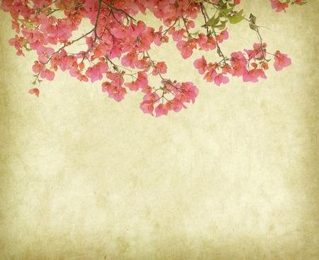 vintage wallpaper background with Bougainvillea flowers photo