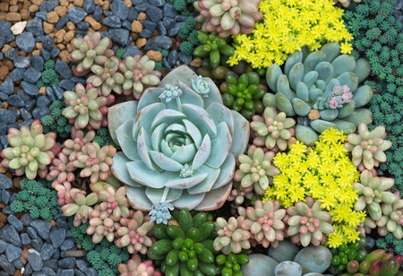 Miniature succulent plants 스톡 콘텐츠