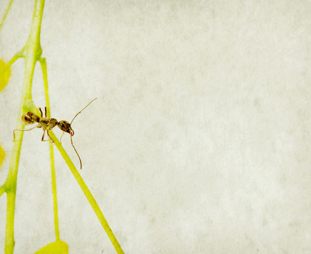 antrey: ant isolate on white background
