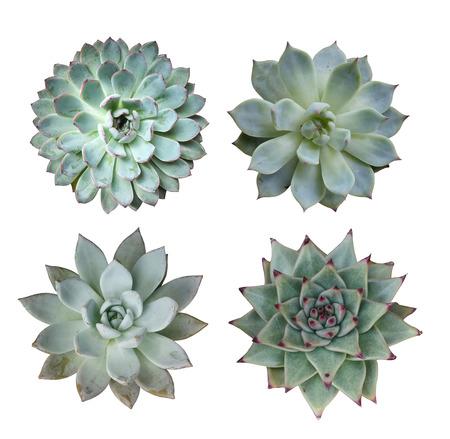 Plantes succulentes miniatures Banque d'images - 36836406