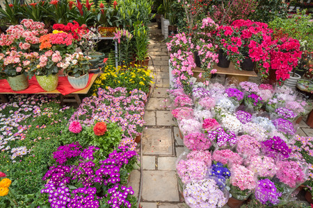 flower in pots on sale at the local garden center Imagens