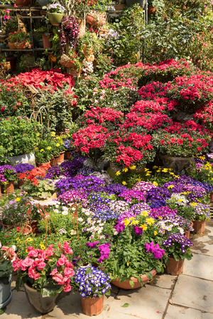 flower in pots on sale at the local garden center