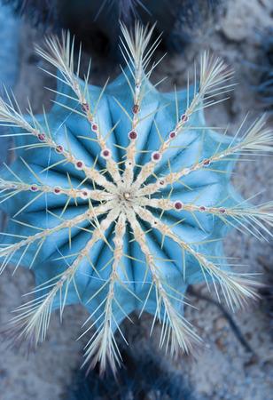 cactus: cactus close up Stock Photo