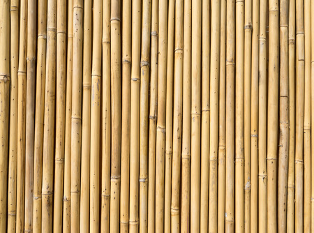 bamboo texture: bamboo fence