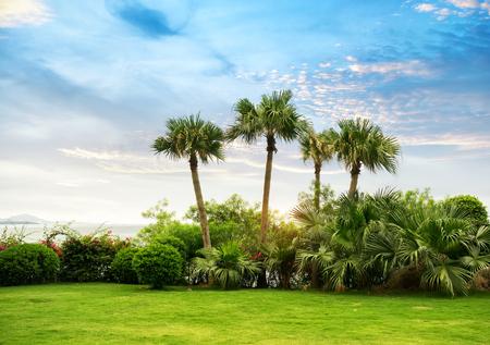 paradise beach: Palm tree silhouette on paradise sunset on the beach