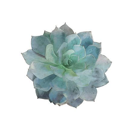 Watercolor vetplant
