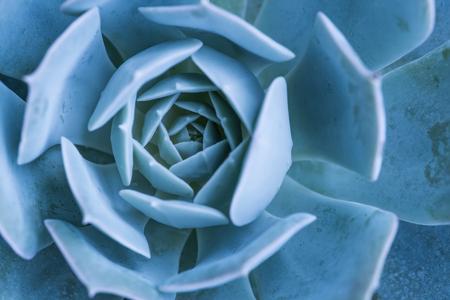 flowering  plant: Miniature succulent plants Stock Photo