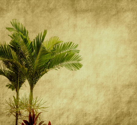 paper old: old paper background with palm leaf Stock Photo
