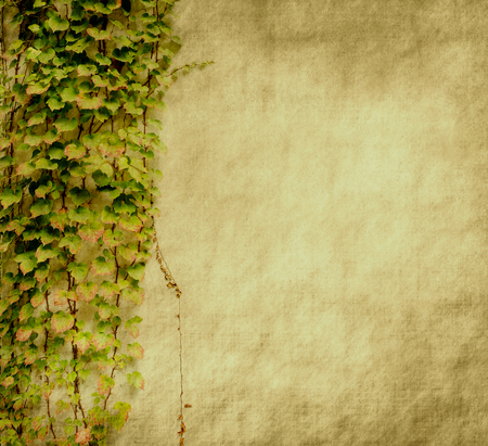 antique paper: green ivy on old grunge antique paper texture Stock Photo