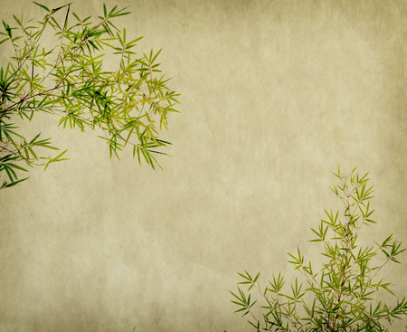 japanese background: bamboo on old grunge paper texture background