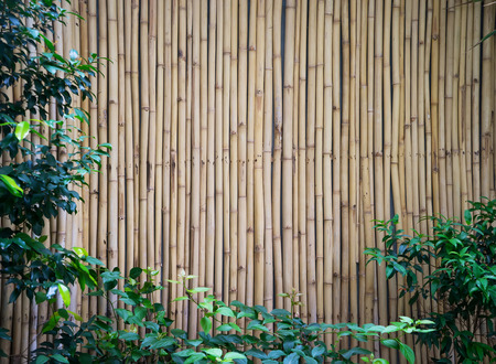 chinese wall: bamboo fence with green plant Stock Photo