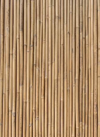bamboo: bamboo fence