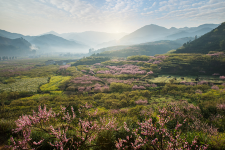 Landelijk landschap, Peach Blossom in moutainous gebied in Shaoguan wijk, de provincie Guangdong, China
