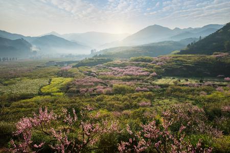 flor de durazno: paisaje rural, flor del melocotón en la zona montañosa en el distrito de Shaoguan, provincia de Guangdong, China