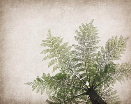 antique paper: Cyathea on antique cracked paper texture