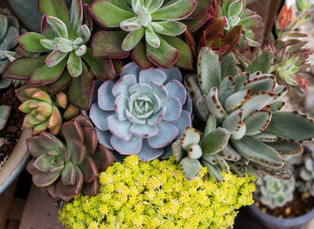 Miniature succulent plants in garden Stock Photo