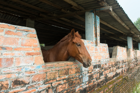 horse stable: Horse in stable