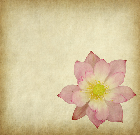 page background: Water Lily on grunge textured background Stock Photo