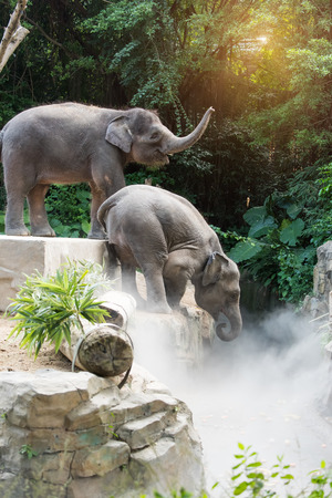 two young elephants playing
