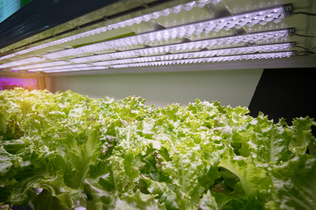 Organic hydroponic vegetable garden Foto de archivo