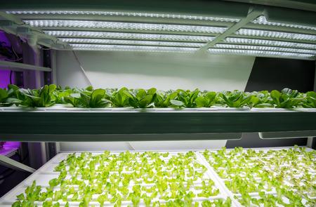 Organischer hydroponischer Gemüsegarten Standard-Bild - 67371752