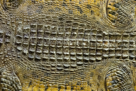krokodil huidtextuur.